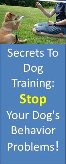 Dog training for Beagle puppies & Labrador puppies